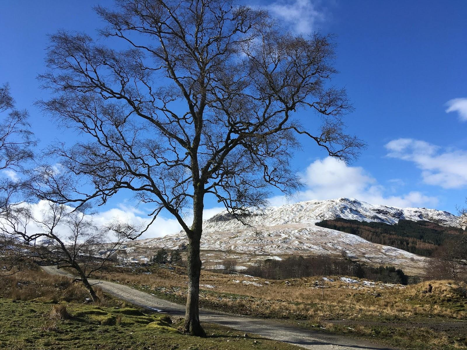 Leafless tree in front of snow covered hill with blue sky. A sense of isolation and change.